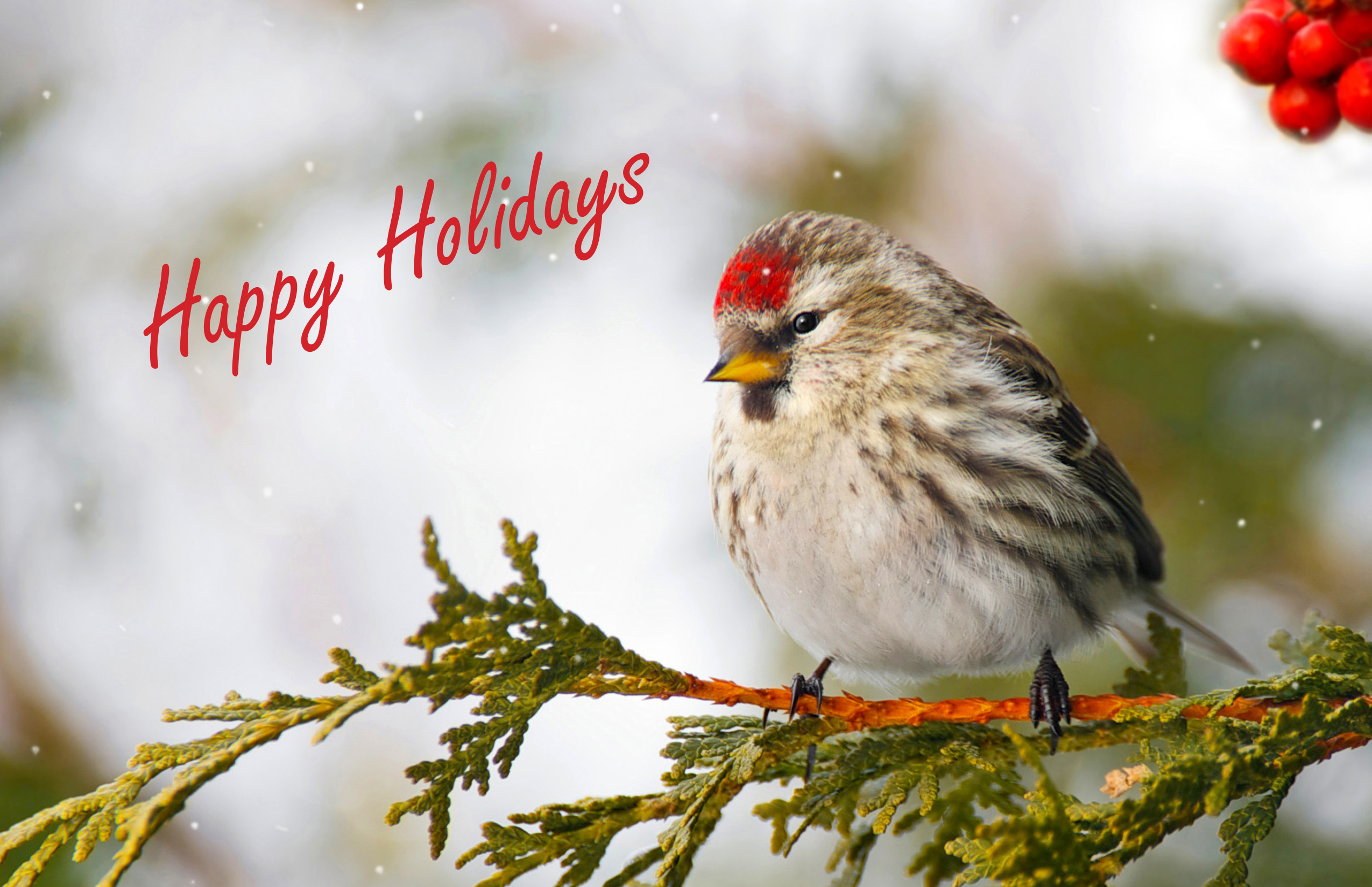 2019 Happy Holidays Greeting Card