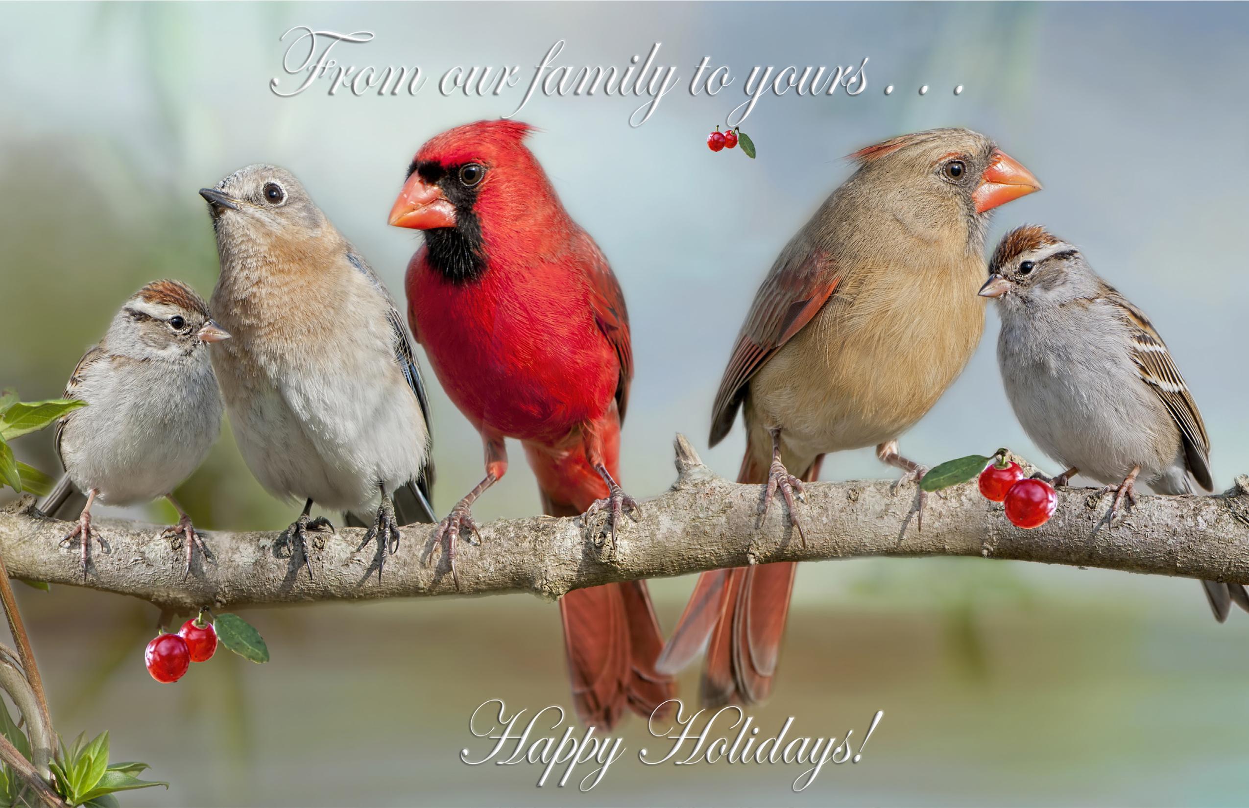 2020 Happy Holidays  Birds Greeting Card